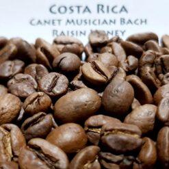 กาแฟคอสตาริก้า Costa Rica Canet Musician Bach