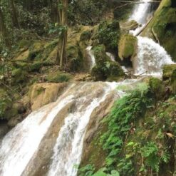 Guatemala Flor del Rosario la Cascada 3