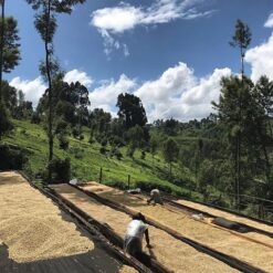Kenya Thika Gichuka AA 3