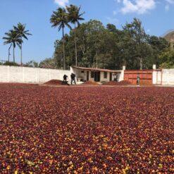 กาแฟกัวเตมาลา Guatemala Ayarza Anaerobic Natural