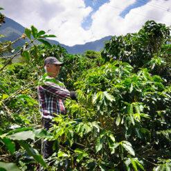 กาแฟโคลัมเบีย Colombia San Pablo Washed