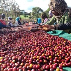 กาแฟเอธิโอเปีย Ethiopia Anasora Anaerobic Natural