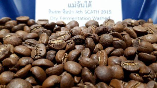 แม่จันใต้ สินธพ จือปา Dry Fermentation Washed